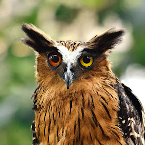 Hauntee by Andrial Kusuma - Animals Birds
