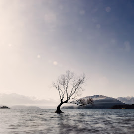 T h a t L o n e l y T r e e by Anupam Hatui - Landscapes Waterscapes ( nature, tree, waterscape, lake wanaka, landscape, new zealand, lonely tree )