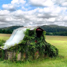 Arkansas by Joel Mcafee - Landscapes Prairies, Meadows & Fields