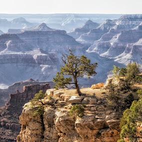 Grand Canyon III by Kai Buddensiek - Landscapes Mountains & Hills ( landschaft, 17-55, landscape, usa, grand canyon )