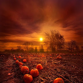 The Forgotten Few by Phil Koch - Landscapes Prairies, Meadows & Fields ( vertical, wisconsin, ray, yellow, travel, landscape, photography, sun, life, sky, emotions, weather, horizons, light, office, clouds, heaven, colors, art, twilight, mood, journey, horizon, scenic, living, portrait, country, field, blue, serene, sunset, outdoors, meadow, beam, lines, sunrise )