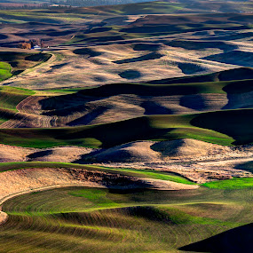 Velvet Farmland by John Larson - Landscapes Prairies, Meadows & Fields ( terrain, farm, hills, farmland, wheat fields, fields )