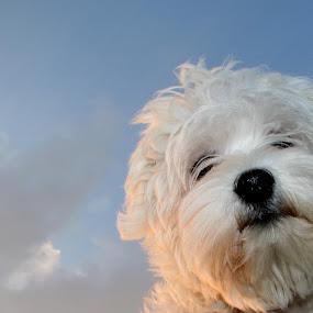 Luna by Mario Novak - Animals - Dogs Portraits