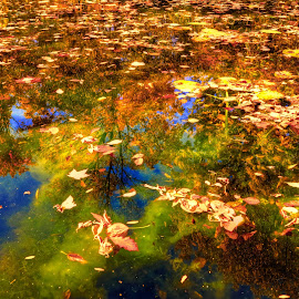 leaves on water by Fraya Replinger - Nature Up Close Water ( water, fall, yellow, leaves, pond )