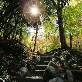 Stairway to Nature by Karen Carter Goforth - Uncategorized All Uncategorized ( steps, trees, sun,  )