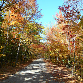 Country roads by Sandy Davis DePina - Landscapes Forests ( blue sky, maine, foliage, fall, trees, road )