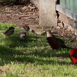 by Sarah Harding - Novices Only Wildlife ( bird, nature, novices only, wildlife )