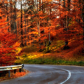 Autumn story by Mikaela Dana - Landscapes Mountains & Hills ( mountain, autumn, colors, trees, road, nikon, leaves )