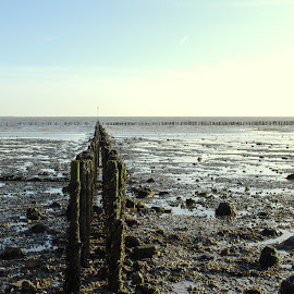 East Mersea Cudmore Grove by Mike Tricker - Landscapes Beaches ( beach     cudmore grove     rule of thirds     tide,  )