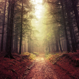 20170916-DSC_1656 by Zsolt Zsigmond - Landscapes Forests ( mystery, forest, leaf, landscape, light - natural phenomenon, tree, nature, season, autumn, fog, outdoors, woodland, sunbeam, mist )