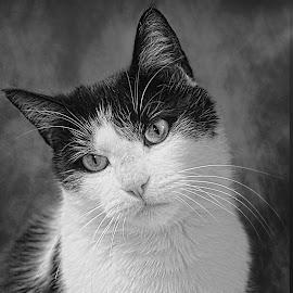by Susan Hogan - Black & White Animals