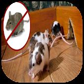 Mice House