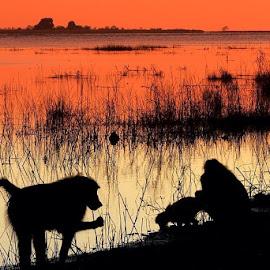 Silouet by Romano Volker - Animals Other Mammals