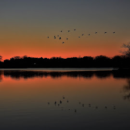Mirrored Migration by Kathy Woods Booth - Landscapes Sunsets & Sunrises ( water, mirrored reflections, sunset, lake, geese, dusk )