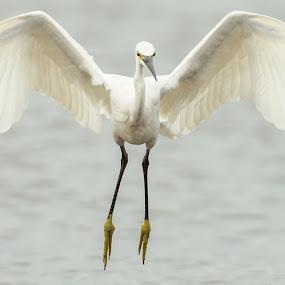 GRACEFULLNESS by Muhammad Yamani - Animals Birds