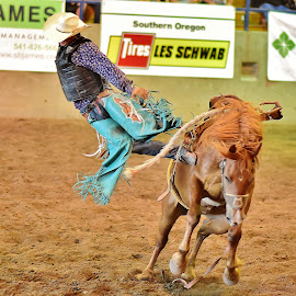 by Randy Young - Sports & Fitness Rodeo/Bull Riding