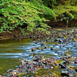 by Siniša Almaši - Nature Up Close Water ( stream, nature, autumn, view, stones, light, depth, landscape tree, river, colours )