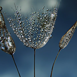 Raphsody In Blue by Marija Jilek - Nature Up Close Natural Waterdrops