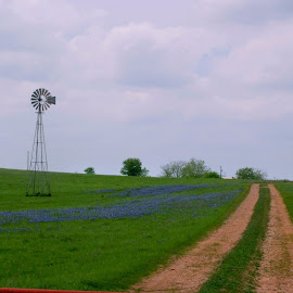 Bluebonnet road. by Brenda Shoemake - Transportation Roads (  )
