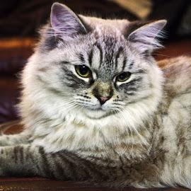 Purrrfect by Ingrid Anderson-Riley - Animals - Cats Kittens (  )