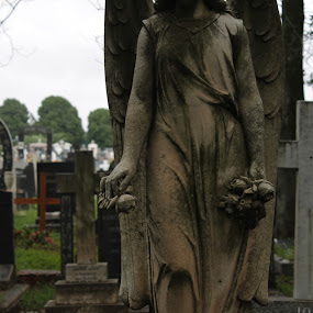 Angel1 by Jean Plessis - City,  Street & Park  Historic Districts ( angel, tombstone statue, graveyard )