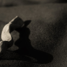 Evening Light by Nathan Giannini - Abstract Macro ( abstract, macro, depth of field, drift wood, sunlight, soft )