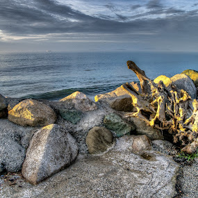drifted wood by Eddie Murdock - Landscapes Beaches