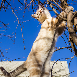 Bound and Determine  by Julie Wooden - Animals - Cats Playing ( cat, kitten, north dakota, hebron, sam, sky, blue sky, tree, nature, autumn, sunny, outdoors, scenery, feline, animal, skyscape,  )
