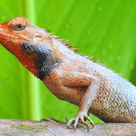 by Kuntal D - Animals Reptiles