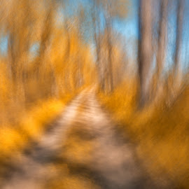 Spinning Gold Trail by Nicolas Raymond - Abstract Light Painting ( curve, wood, rotate, swirl, vibrant, yellow, wide-angle, glow, backdrop, colour, circular, colourful, nature, tree, movement, surreal, branches, impressions, wind, grass, texture, national, atmosphere, somadjinn, passageway, magic, hot, warmth, scene, branch, trees, lines, america, line, usa, fantasy, symmetrical, epic, nicolas raymond, dreamlike, trunks, blurring, spin, streaking, gold, twirl, linear, pathway, park, beautiful, ethereal, canal, blurred, cyan, pattern, magical, wide angle, background, glowing, scenery, atmospheric, impressionism, dreamy, round, heat, sky, spinning, passage, foliage, impressionistic, trail, maroon, maryland, walkway, motion, blurs, orange, winding, colors, impression, symmetric, forest, united states, colours, co, streak, environment, trunk, twirling, symmetry, golden, swirling, warm, colorful, twirls, way, blur, beauty, landscape, pretty, curves, panning, path, swirls, abstract, curving, poolesville, scenic, woods, environmental, pan, vortex, curvy, spins, wooden, color, blue, streaks, summer, brown, curved, sycamore landing )