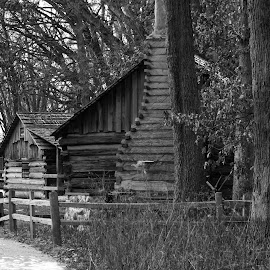 Cabin in the Woods by Allen Walker - Buildings & Architecture Homes ( sand, old, nature, hand built, wooden cabin, forest, rustic, ridge )