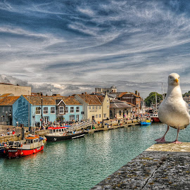 Weymouth harbour summer time by Noel Wittin - City,  Street & Park  Neighborhoods ( bird, sky, harbour, buildings, historic )
