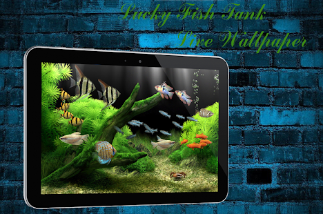 App lucky fish tank livewallpaper apk for windows phone for Fish tank app