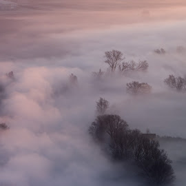 Morning mist around the trees by Pietro Ebner - Landscapes Prairies, Meadows & Fields ( clouds, tress, tree, fog, mist )