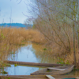 In Peace they Rest by José Pedro Whiteman - Landscapes Travel ( water, old, winter, tree, boats, trees, abandon, boat, decay, abandoned, river )
