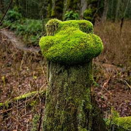 Its not easy being green. Kermit. by Laddy Kite - Nature Up Close Other Natural Objects