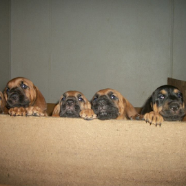 by Terry Linton - Animals - Dogs Puppies