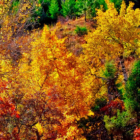 Fall Colors by Bruce Newman - Landscapes Mountains & Hills ( nature, fall colors, vivid, colorado, vivid colors, landscape photo,  )