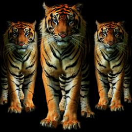 Fear by Yohanes Arief Dewanto - Digital Art Animals ( wild, digital art, digital, animal, photoshop )