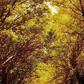 Autumn by Karin De Leeuw Luck - Nature Up Close Trees & Bushes ( autumn, leaves )