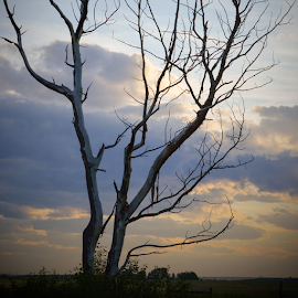 Death On The Prairies by Sylvia Meier - Landscapes Sunsets & Sunrises ( nature, tree, color, sunset, prairies, landscape )
