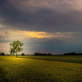 Lonely by Jeso Eos - Landscapes Prairies, Meadows & Fields ( clouds, field, natural light, sky, purple, nature, tree, sunset, sun )