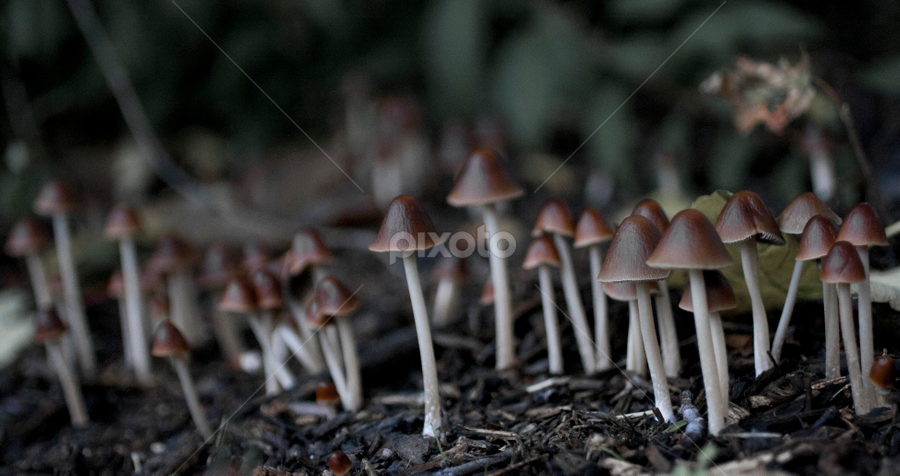 Mushrooms by Alina Jumabhoy - Nature Up Close Mushrooms & Fungi ( wild, macro, nature, family, ground, forest, mushrooms,  )