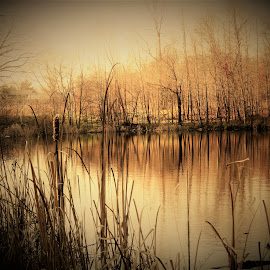 Fall pond view by Mary Gallo - Landscapes Waterscapes ( water, nature, fall, landscape, pond )