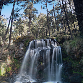 waterfall and forest by Cristobal Garciaferro Rubio - Landscapes Waterscapes ( pines, water, mexico, waterfall, trees )