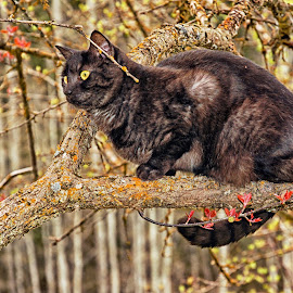 Cat up a Tree by Twin Wranglers Baker - Animals - Cats Portraits