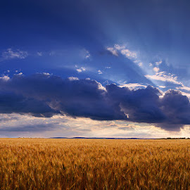 Hungarian skies pt.200. by Zsolt Zsigmond - Landscapes Prairies, Meadows & Fields ( wheat, field, clouds, sky, sunrays, panorama )