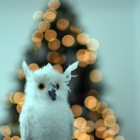 white owl by Herry Wibisono - Artistic Objects Toys ( toy, xmas, owl, white, christmas, white owl, bokeh )