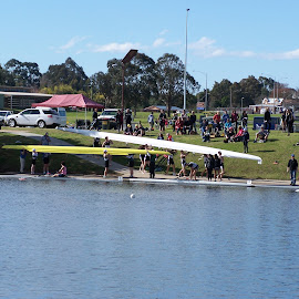 Rowing Regatta by Sarah Harding - Novices Only Sports ( rowing, novices only, sport, boat, competition )