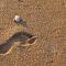 footshell2 (2).jpg